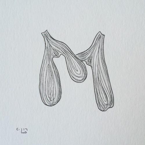 mistletoe.JPG